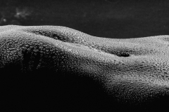 Wet body